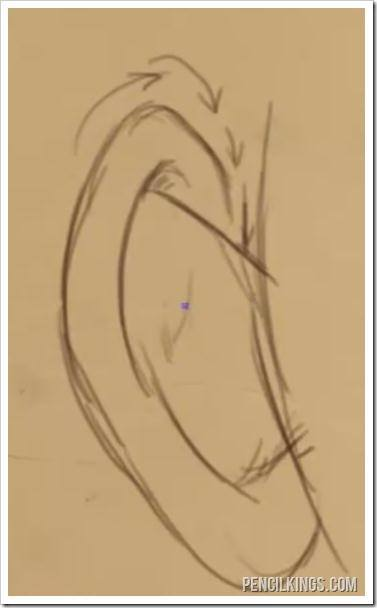draw realistic ears back view