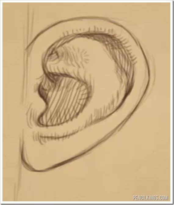 draw a realistic ear finished line drawing