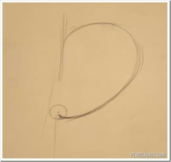 draw an ear side view basic shape