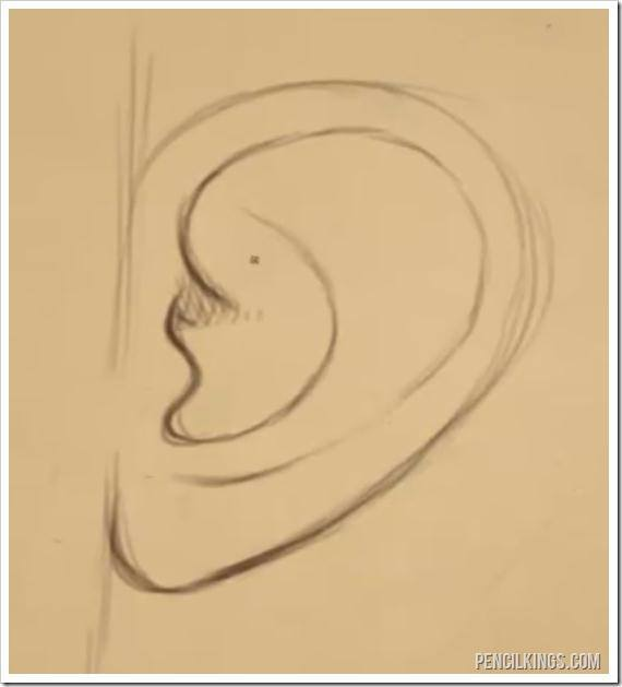 drawing ears from the side ear lobe