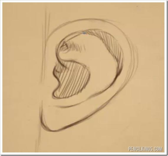 drawing ears side view drawing