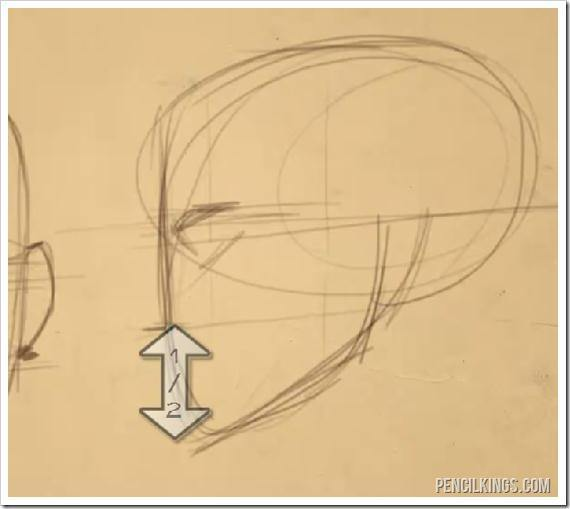 how to draw a face side view chin proportions