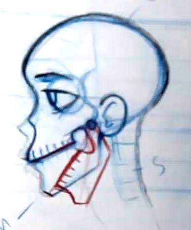 Drawing the jaw on the skull