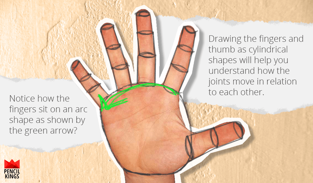 How to Draw Hands Without the Hassle 5 hand finger cylinders 1