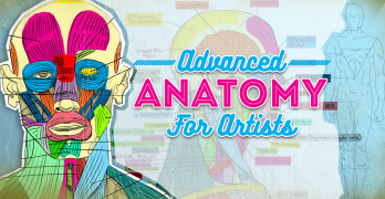 Advanced Anatomy for Artists: Draw any Pose or Body Type