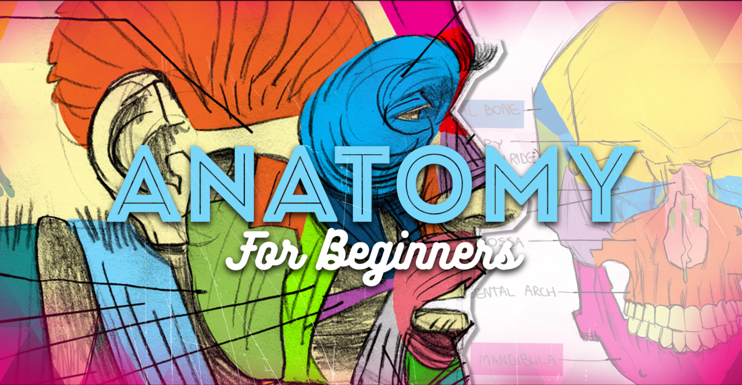 Anatomy For Beginners A Complete Video Course For Artists