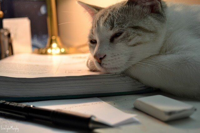 anxiety-and-creativity-cat-asleep-on-book