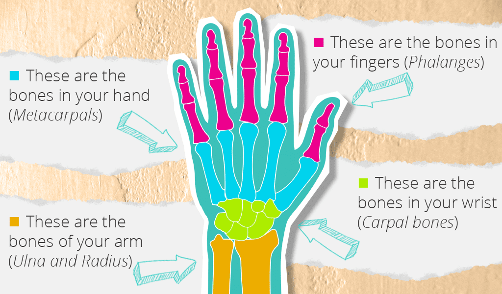 drawing-hands-basic-anatomy