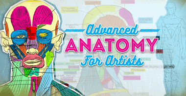 Courses 22 advanced anatomy for artists featured image TH 1