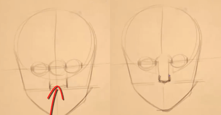 Male and Female Noses