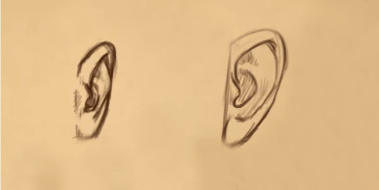 How to Draw Ears 2 how to draw the ears