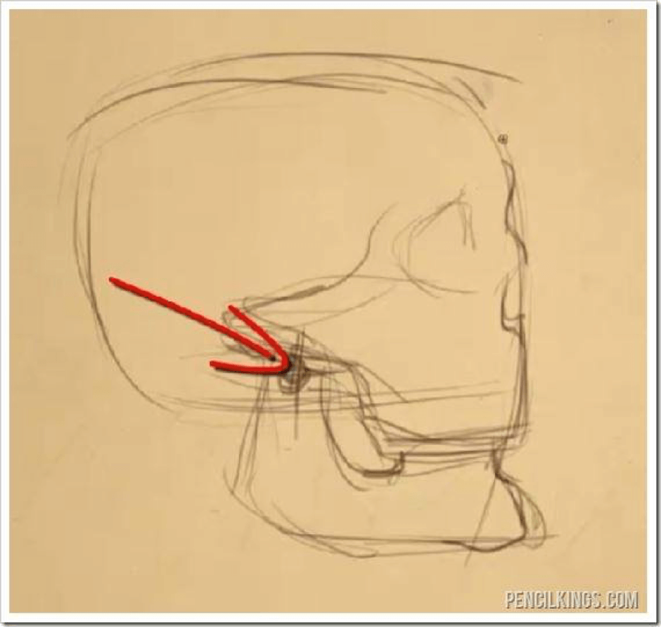 How to Draw the Jaw 3 jaw 1