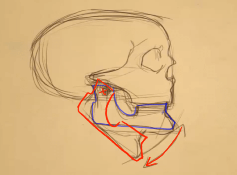 How to Draw the Jaw 5 jaw 3