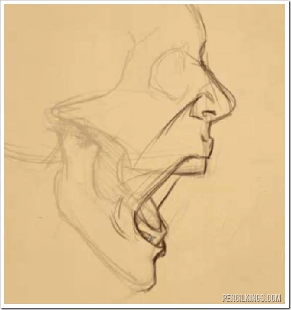 How to Draw the Jaw 7 jaw 5
